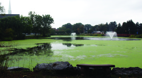 Duckweed covers Lake Placida, provides project opportunity