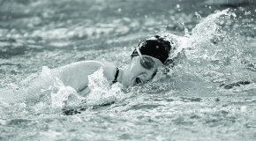 Men's, women's swim teams take down Gallaudet University